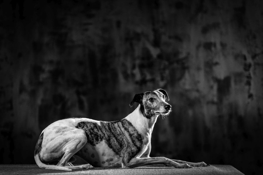 servizio fotografico cane a Milano